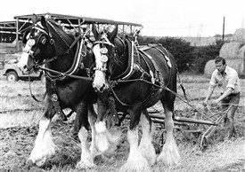 Photo: Illustrative image for the 'Ploughing Match' page